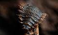 Fly larva (11344822433).jpg