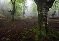 Foggy Light (101146013).jpeg