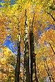 Foliage Walk (8) (30264485241).jpg