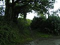 Footpath from Bowlish to Whiptail Wood and Sherwood - geograph.org.uk - 1434514.jpg