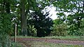 Footpath in the Hardwick Estate - geograph.org.uk - 585112.jpg