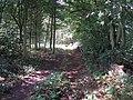 Footpath through Hamilton Wood - geograph.org.uk - 1450850.jpg