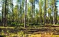Forest (6926906891).jpg