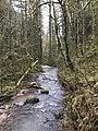 Forest Park Portland - Ari Weil (39909476800).jpg