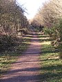 Forest Track - geograph.org.uk - 119201.jpg