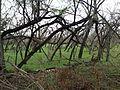 Forest iitm.jpg
