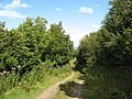 Forest track - geograph.org.uk - 946772.jpg