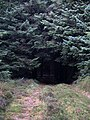 Forest walk, Cardrona Forest - geograph.org.uk - 243003.jpg