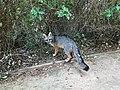 Fox (39853591280).jpg