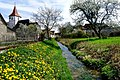 Frühling am Wachbach.jpg