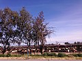 Fresno, CA, USA - panoramio (65).jpg