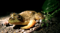 Frog (6158905528).png