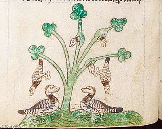 Barnacle Geese Myth