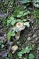 Fungus (4).jpg