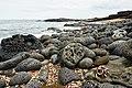 Galapagos (40483559983).jpg