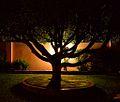 Garden, Kampala, Uganda (15299305026).jpg
