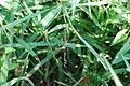 GardenSpider web.JPG