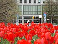 Garden of the Provinces and Territories - Tulip Festival - 1.jpg