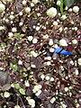 Gardenology-IMG 4785 hunt10mar.jpg