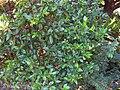 Gardenology.org-IMG 0400 rbgs10dec.jpg