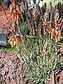Gardenology.org-IMG 2739 hunt0903.jpg
