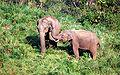 Gavi elephants 2.jpg