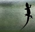 Gecko on My Window 2 (17729540).jpg