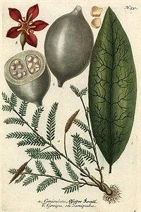 Geniculata and Genipa
