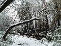 Georgia snow IMG 4572 (24081896157).jpg