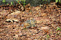 Gfp-wisconsin-rib-mountain-state-park-small-chipmunk.jpg