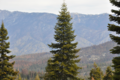 Giant Sequoia National Monument, Sequoia NF (27270780115).png