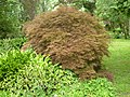 Giardino di Ninfa 140.jpg