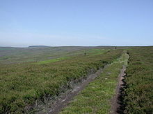 Gisborough Moor.jpg