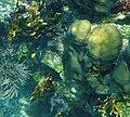 Glover's Reef 2-15 (33177362342).jpg
