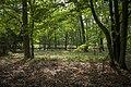 Gmina Izbica Kujawska, Poland - panoramio.jpg