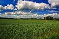 Gmina Narew, Poland - panoramio (100).jpg