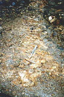 Lode part of a rock body that holds ore