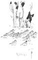 Goudplevier Pluvialis apricaria Jos Zwarts 2.tif