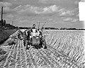 Graan oogsten in de Haarlemmermeer, Bestanddeelnr 907-9846.jpg