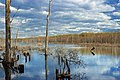 Grass Lake (Revisited) (8) (17176458149).jpg