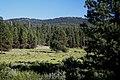 Grassland & Forest along Deer Creek-Malheur (23304981573).jpg