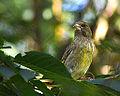 Green Finch (9649548700).jpg
