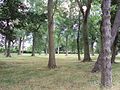 Green Space, Weelsby, east Grimsby - DSC07314.JPG