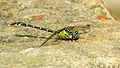 Green eyes dragonfly HNP cheek (16071148208).jpg
