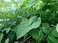 Green grasshopper camouflage.jpg