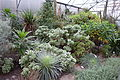 Greenhouse interior - Botanischer Garten, Dresden, Germany - DSC08429.JPG
