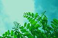 Greenlove (14229718511).jpg