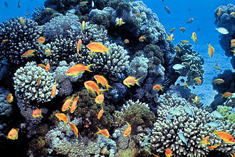The Structure and Distribution of Coral Reefs - Reefs were formed by corals living in shallow depths of water.