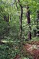 Hütteldorfer Friedhof Bäume.jpg