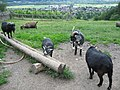 HEIDI ZIGEN KAI - panoramio - KAI LARS SCHERER.jpg